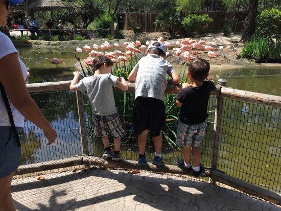 Can You Bring Food Into San Diego Safari Park