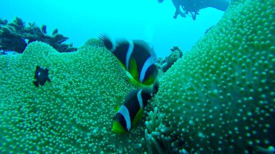 Blue Sea Divers: photo6.jpg