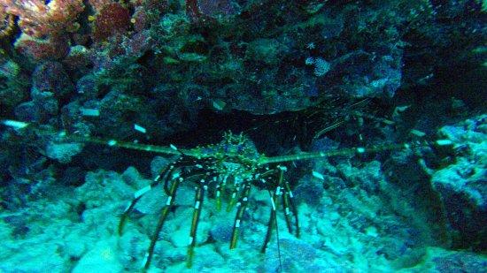 Blue Sea Divers: photo7.jpg