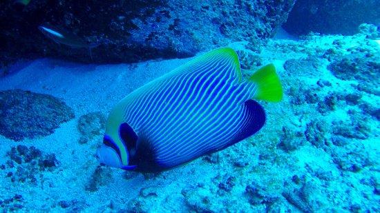 Blue Sea Divers: photo9.jpg