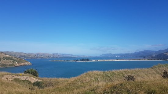 Otago Peninsula: 20170408_120203_large.jpg