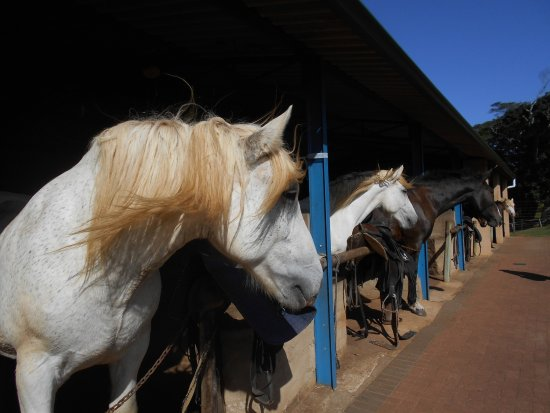 Marina Beach, Afrique du Sud : The beautiful, well looked after and happy horses.