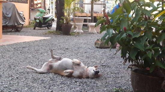 Mak Mak Family Restaurant: Only dog was friendly ^_^