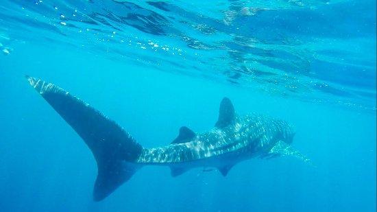 Kings Ningaloo Reef Tours Exmouth: photo0.jpg