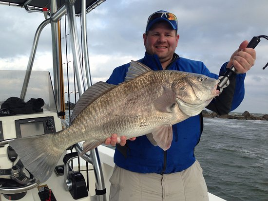 Atlantic Beach, FL: Black Drum