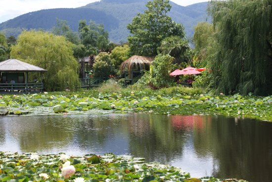 Blue Lotus Water Garden: nice place to relax