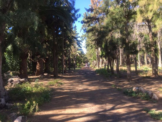 Club Drago Park Hotel: Lovely woodland walk to the beach