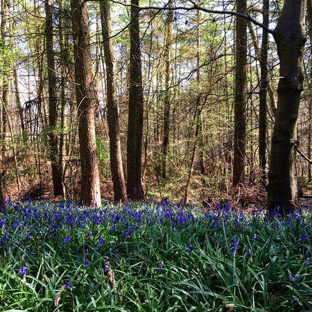 Nympsfield, UK: Walking near campsite