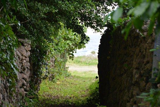 大島郡喜界町, 鹿児島県, ジャングルのような阿伝街のサンゴの石垣