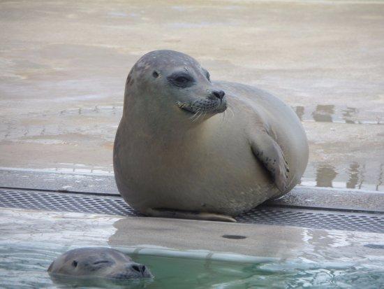 Pieterburen, Niederlande: on peut parrainer les phoques