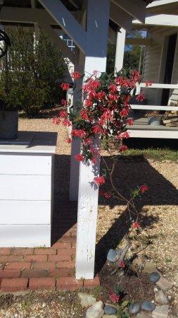 Marietta, Τζόρτζια: Spring is coming