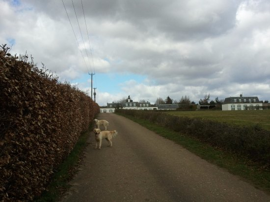 Risby, UK: Dog walking - no problem!