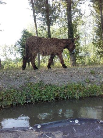 Magne, Francja: Rencontre avec l'âne du Poitou