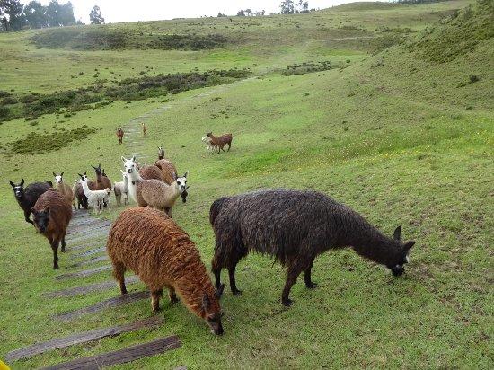 Pichincha Province, เอกวาดอร์: DSC05135_large.jpg