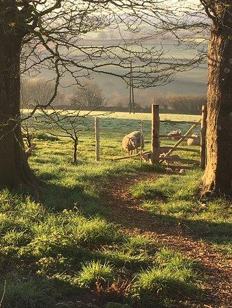 Yelverton, UK: photo3.jpg