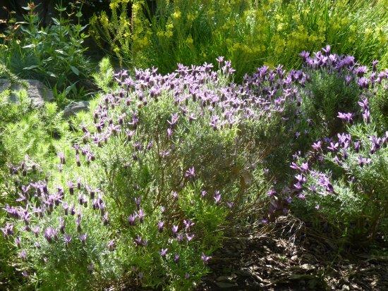 William Land Park: Sunlight on one of hundreds of flowers in the Rock Garden.
