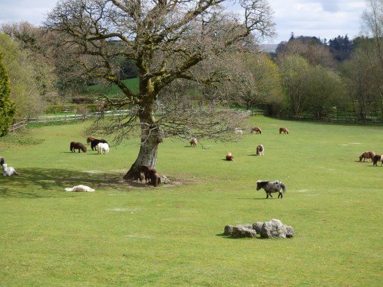Miniature Pony Centre: Lots of ponies to meet