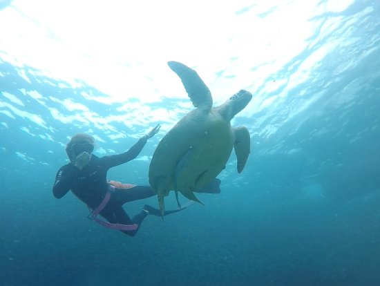 Freedive HQ: Highlight of the trip - swimming with whale sharks, sardines and turtles!