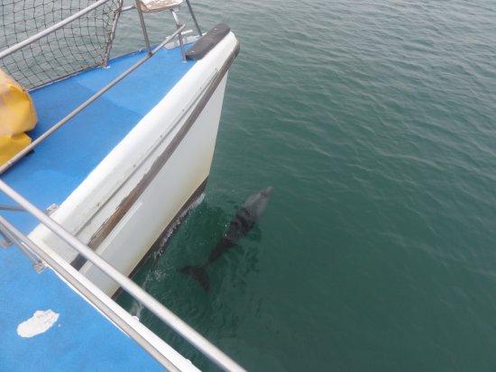Zeepaard Boat Tours: Delphine unter dem Boot