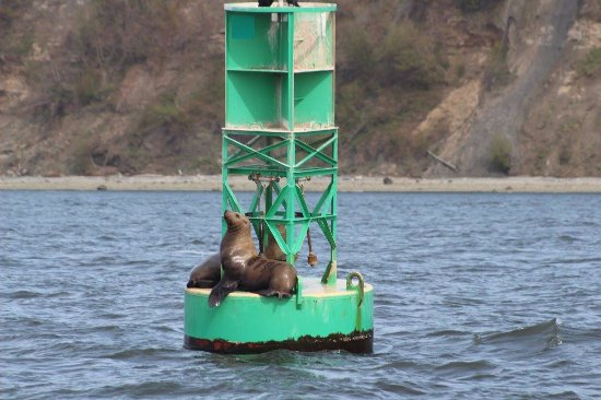 Port Townsend, Waszyngton: Sea lions just hanging out