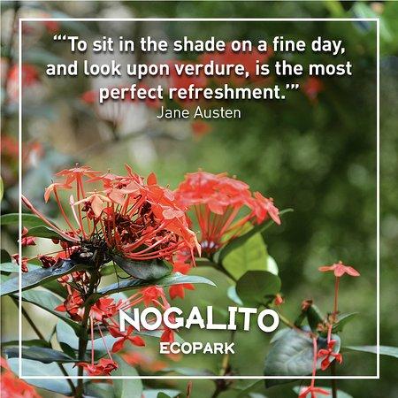 Quote Of The Day Picture Of Nogalito Eco Park Puerto Vallarta