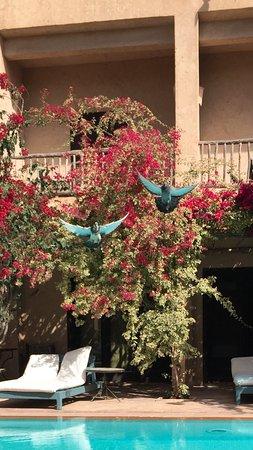Dar Tourkia: la pisine et au bord notre chambre