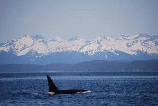 49th fathom charters juneau all you need to know for Juneau alaska fishing