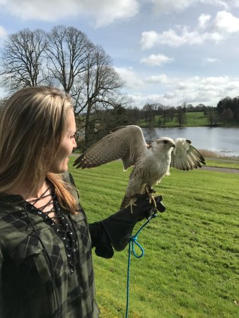 Julianstown, Irlandia: Perrigrine Falcon