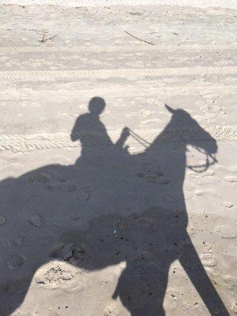 Happy Trails Walking Horses: photo1.jpg