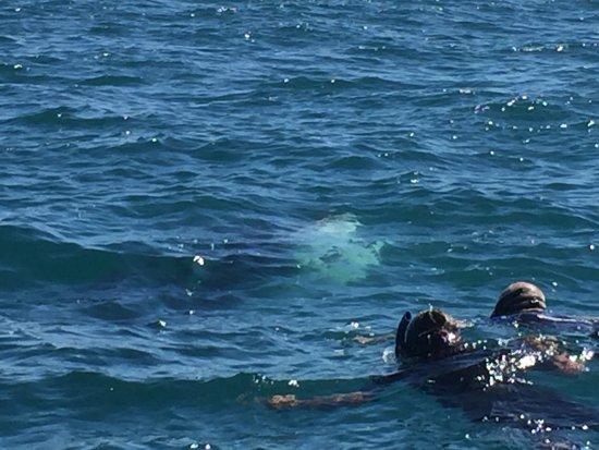 Marlin Adventures: photo4.jpg