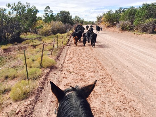 Virgin, UT: Our private cattle drive tours