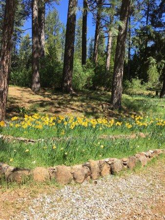 Jackson, Kaliforniya: Daffodil Hill