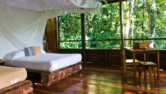 ‪‪La Loma Jungle Lodge and Chocolate Farm‬: Spot sloths as you lie in bed in cabin 1‬