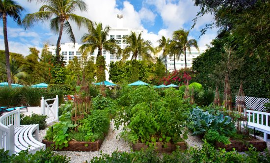 The Palms Hotel & Spa: Organic Chef's Garden at The Palms