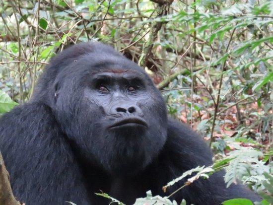 Nkuringo Bwindi Gorilla Lodge: On the gorilla trek
