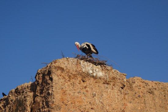 Maison Arabo Andalouse: Vue de la terrasse