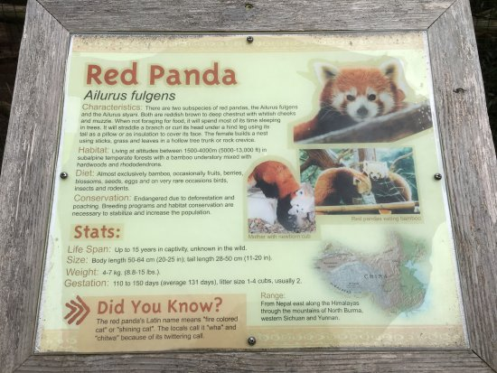 Cape May Court House, NJ: Red Panda