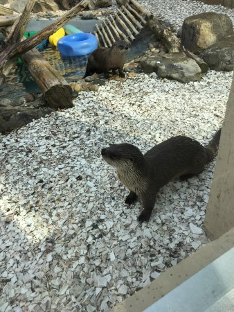 Cape May Court House, Nueva Jersey: River otters!