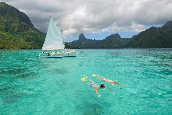 Moorea, French Polynesia: Coral garden, fish and cool water... the best !