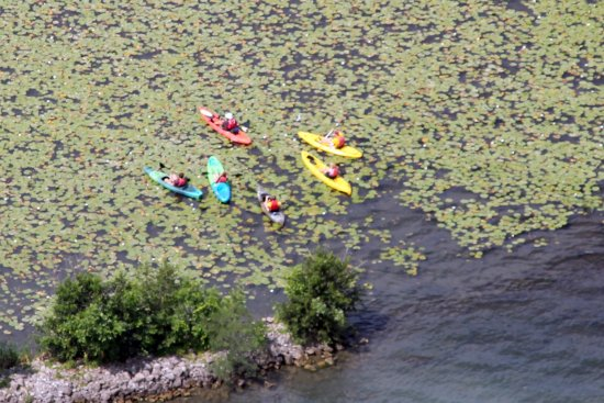 Grand Island, NY: Guided Kayak eco tour from above!