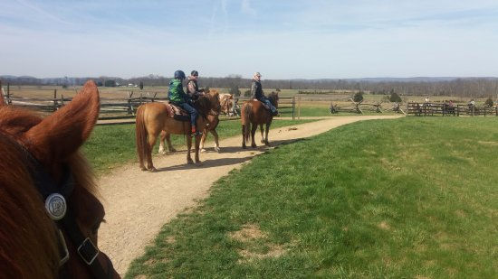 Hickory Hollow Horse Farm : Waiting for another group to pass