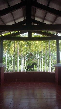 JW Marriott Panama Golf & Beach Resort: Vista del club de golf, donde se celebran bodas debajo del gran arbol de corotú.