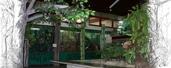 Museu de Zoologia Prof.ª Morgana Cirimbelli Gaidzinki da Unesc