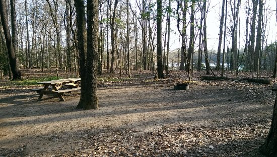 Felton, DE: Camping Site on D Loop