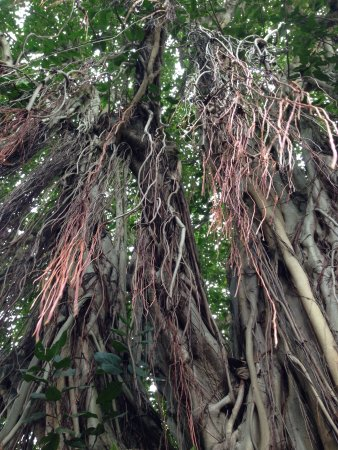 J.R. O'Neal Botanic Gardens: photo0.jpg