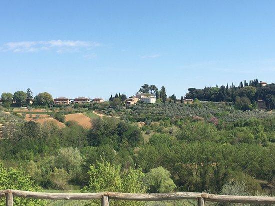Agriturismo Marciano : Lovely organic vineyard.