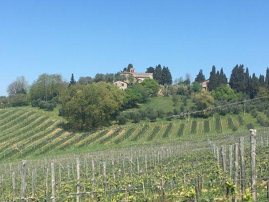 Agriturismo Marciano: Lovely organic vineyard.