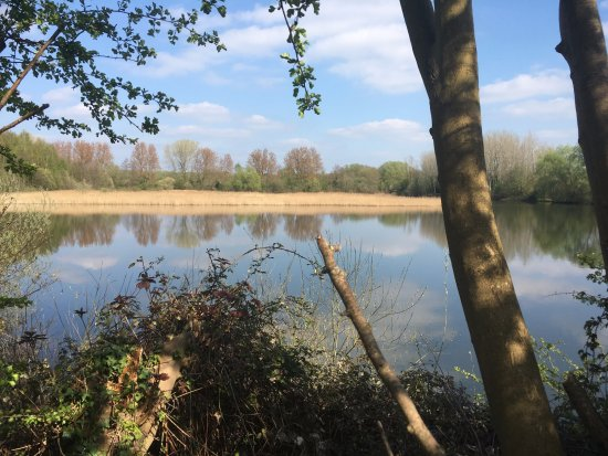 Paxton Pits Nature Reserve: ... and another lake view!