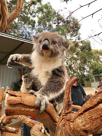 Seddon, Australien: photo1.jpg