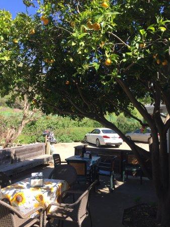Linn's Fruit Bin Farmstore: Small eating area under a Valencia orange tree.